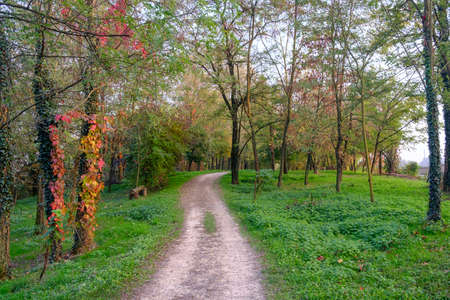 monza: Lambro valley (Monza Brianza, Lombardy, Italy): bicycle and pedestrian track in the forest at fall