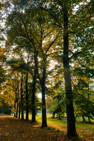 monza: Monza (Brianza, Lombardy, Italy): the park at fall (october), a path