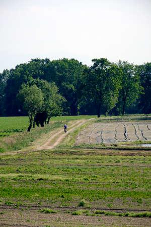 poblíž: Country landscape near Pavia (Lombardy, Italy) in the springtime with a cyclist Reklamní fotografie