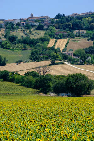 Rural landscape at summer along the road from Recanati to Potenza Picena (Macerata, Marches, italy)