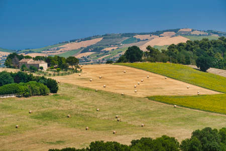 Rural landscape at summer along the road from SantElpidio a Mare to Monte Urano
