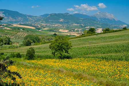 Landscape near Loreto Aprutino (Pescara, Abruzzi, Italy) at summer 版權商用圖片