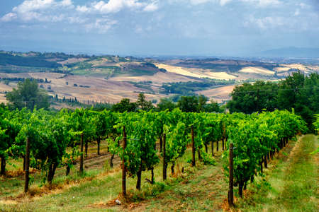 Country landscape along the road fron Montepulciano to Asciano, Siena, Tuscany, Italy, at summer