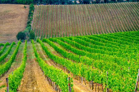 Country landscape along the road fron Montepulciano to Asciano, Siena, Tuscany, Italy, at summer. Vineyards Stock Photo