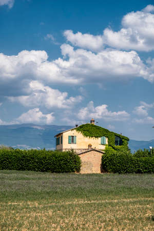 Country landscape at summer between Spello and Perugia (Imbria, Italy). House with creeper plants