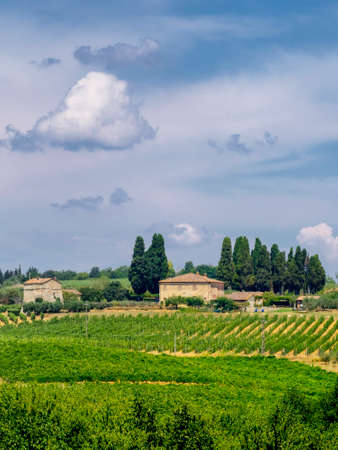 Typical rural landscape in the region of Chianti, in Tuscany, Italy, in a sunny summer day 免版税图像