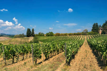 Typical rural landscape in the region of Chianti, in Tuscany, Italy, in a sunny summer day. Vineyard