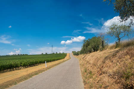 Typical rural landscape in the region of Chianti, in Tuscany, Italy, in a sunny summer day. Road