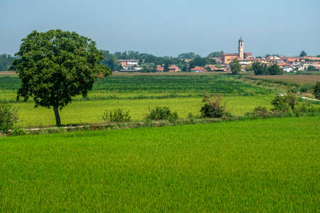 Rural landscape along the Po cycle path near Orio Litta (Lodi, Lombardy, Italy) at summer Фото со стока