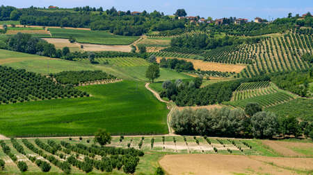 The road to Govone and San Martino Alfieri, Asti, Monferrato, Piedmont, Italy, at summer. Vineyards