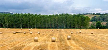 Rural landscape at summer near Casale Monferrato, Alessandria, Piedmont, italy 스톡 콘텐츠