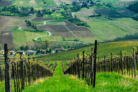 Oltrepo Pavese, Pavia, Lombardy, Italy: country landscape of the vineyards in springtime (April)