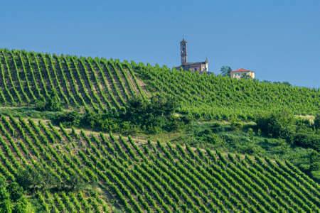 Oltrepo Pavese, Pavia, Lombardy, Italy: hills with vineyards at late spring (June)