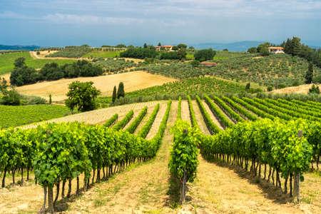 Ländliche Landschaft entlang der Straße von Certaldo nach Gambassi Terme, Florenz, Toskana, Italien, im Sommer