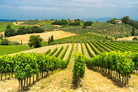 Paesaggio rurale lungo la strada che da Certaldo a Gambassi Terme, Firenze, Toscana, Italia, a summer