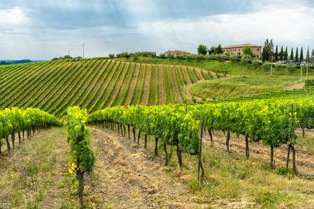 Summer landscape in the Chianti region near Poggibonsi, Siena, Tuscany, Italy. Vineyards