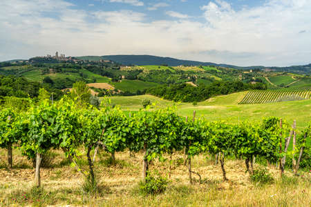 Summer landscape in the Chianti region near Poggibonsi, Siena, Tuscany, Italy with San Gimignano in background