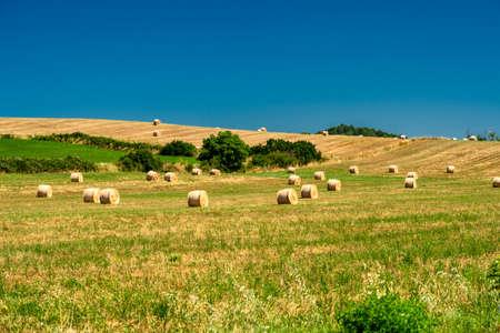 Rural landscape at summer neear Bracciano, Rome, Lazio, Italy Reklamní fotografie