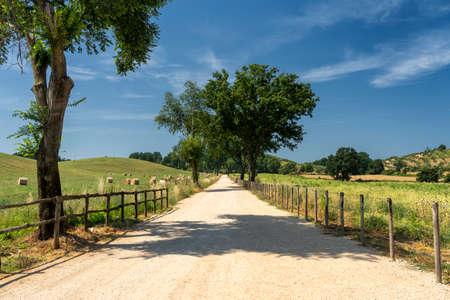 Rural landscape near Velletri, Rome, Lazio, Italy, at summer