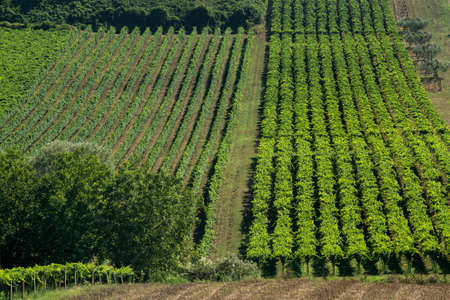 Rural landscape near Chieti, Abruzzo, Italy, at summer. Vineyards