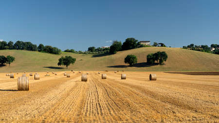 Rural landscape at summer near Petriolo, Macerata, Marches, Italy
