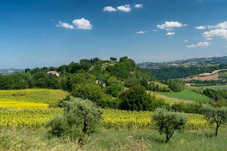 Rural landscape at summer near Montegiorgio, Fermo, Marches, Italy
