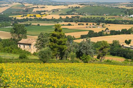 Rural landscape at summer near Macerata, Marches, Italy