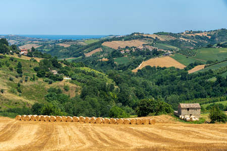 Rural landscape at summer near Monte Giberto, Fermo, Marches, Italy