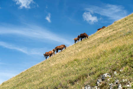 Mountain landscape near the Monte Cucco, between Marche and Umbria, Italy, at summer. Horses at pasture