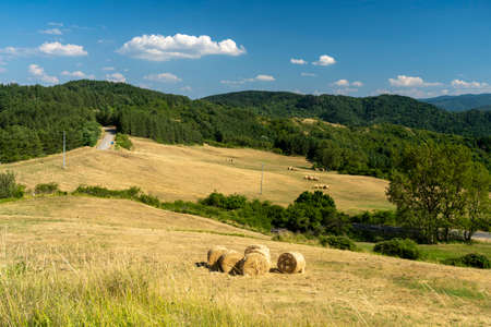 Mountain landscape along the road of Passo della Consuma, Arezzo, Tuscany, Italy, at summer Stockfoto