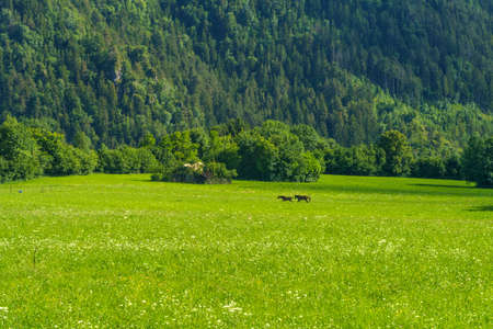 Mountain landscape at summer along the road to Presolana, Bergamo, Lombardy, Italy. Horses