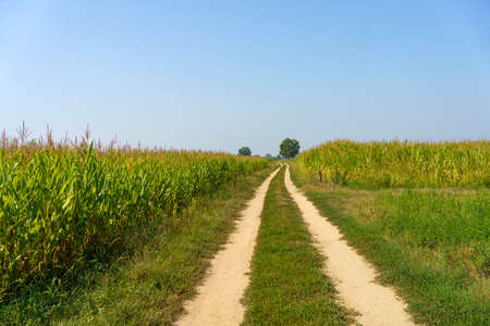 Path in the country near Bereguardo, Pavia, Lombardy, Italy, at September