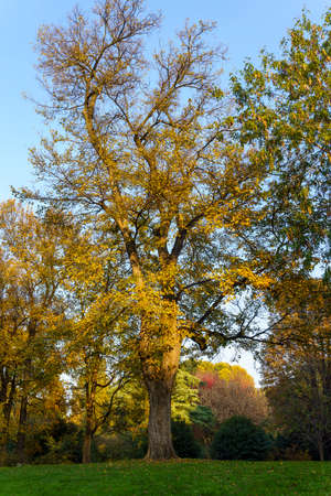 Milan, Lombardy, Italy: historic park known as Parco Sempione at November