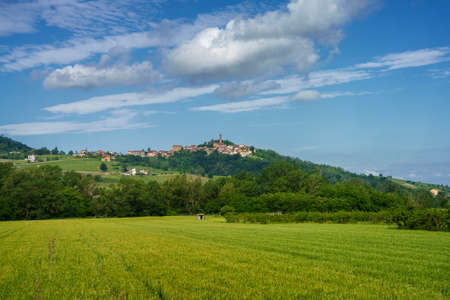 Vineyards on the Tortona hills (Colli Tortonesi), in the Alessandria province, Piedmont, Italy, at springtime