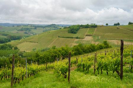 Rural landscape in Monferrato,  Vineyard near Mombaruzzo, Asti province, Piedmont, Italy