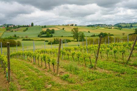 Rural landscape in Monferrato, , near Calliano, Asti province, Piedmont, Italy. Vineyards