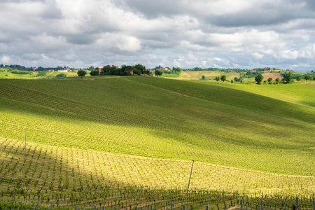 Rural landscape in Monferrato, near Calliano, Asti province, Piedmont, Italy. Vineyards