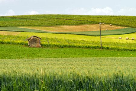 Rural landscape in Monferrato, near Casorzo, Asti province, Piedmont, Italy. Vineyards Archivio Fotografico