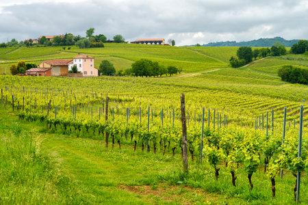Rural landscape in Monferrato, near Vignale, Alessandria Province, Piedmont, Italy. Vineyards
