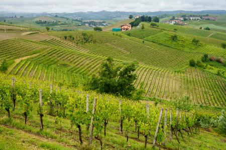 Rural landscape in Monferrato Vineyard near Mombaruzzo, Asti province, Piedmont, Italy Archivio Fotografico