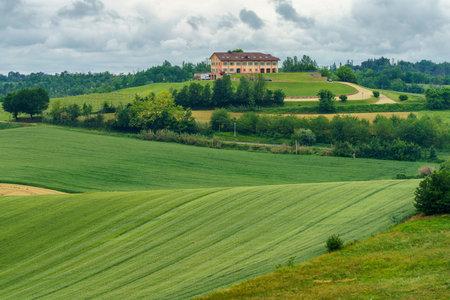 Rural landscape in Monferrato, Vineyard near Cuccaro, Alessandria province, Piedmont, Italy