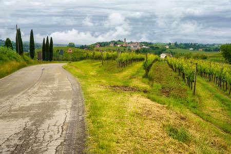 Rural landscape in Monferrato,. Vineyard near Mombaruzzo, Asti province, Piedmont, Italy