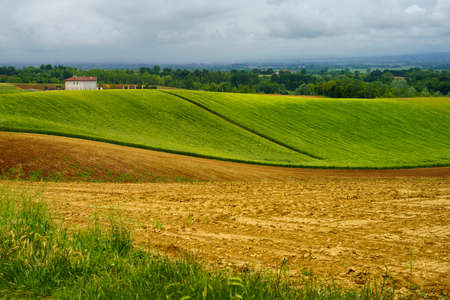 Rural landscape in Monferrato, Site. Vineyard near Cuccaro, Alessandria province, Piedmont, Italy Archivio Fotografico