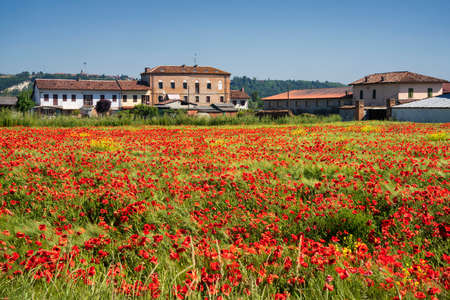 Rural landscape with a field of poppies near Asti, Piedmont, Italy, in a morning of May