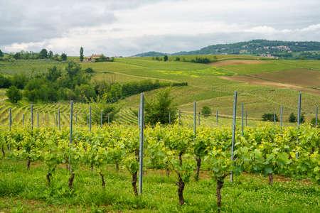 Rural landscape in Monferrato, Site, near Vignale, Alessandria province, Piedmont, Italy. Vineyards Archivio Fotografico