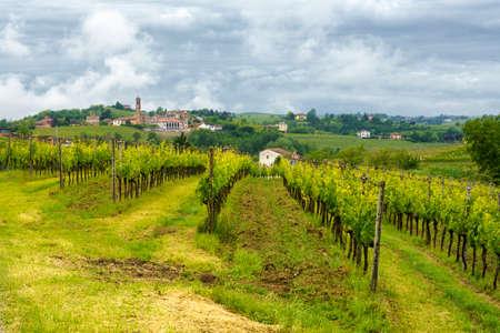 Rural landscape in Monferrato, Site. Vineyard near Mombaruzzo, Asti province, Piedmont, Italy