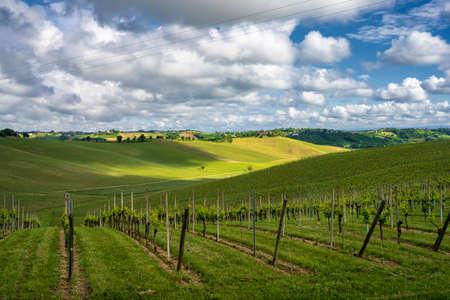Rural landscape in Monferrato, Site, near Calliano, Asti province, Piedmont, Italy. Vineyards