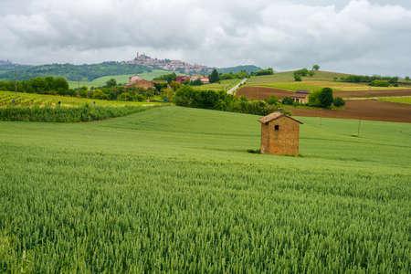 Rural landscape in Monferrato, Site, near Casorzo, Asti province, Piedmont, Italy. Vineyards