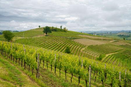 Rural landscape in Monferrato,  Site. Vineyard near Mombaruzzo, Asti province, Piedmont, Italy Archivio Fotografico