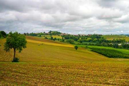 Rural landscape in Monferrato,  Site, near Calliano, Asti province, Piedmont, Italy. Vineyards Archivio Fotografico
